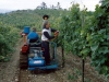 Vineyard binder Tecnovict 105