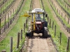 Vineyard chemical desuckering machine