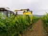 Trimmer for vineyard model 220T