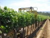 Vineyard trimmer Tecnovict 280